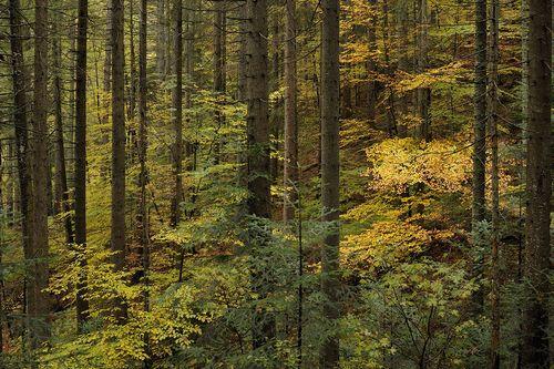 KSH_2011-10-20_3545